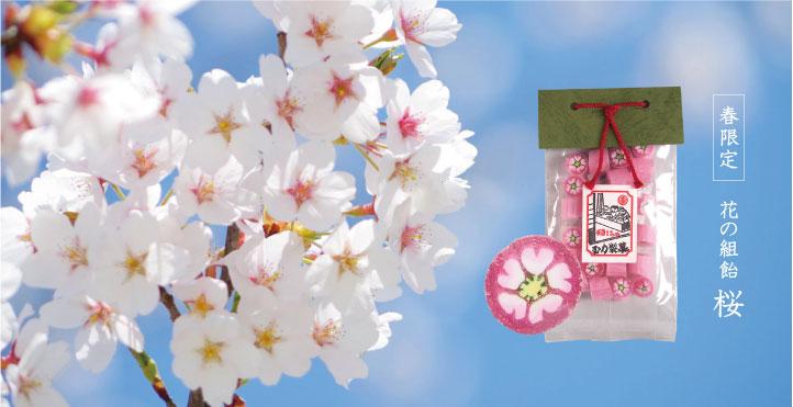 春限定 花の組飴 桜